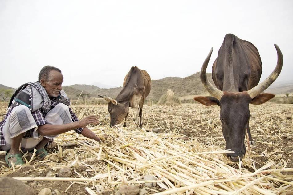 Svalt hotar miljoner i etiopien 3