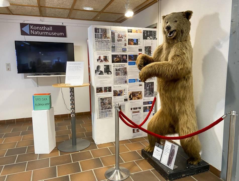 Polisutredning om uppstoppad björn läggs ner